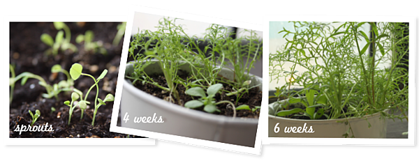 growproces